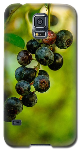 Galaxy S5 Case featuring the photograph Blueberries by John Harding