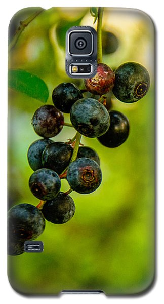 Blueberries Galaxy S5 Case by John Harding
