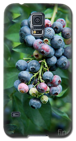 Blueberry Cluster Galaxy S5 Case