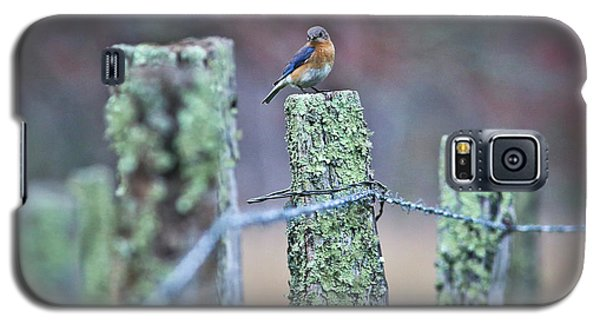 Galaxy S5 Case featuring the photograph Bluebird 040517 by Douglas Stucky