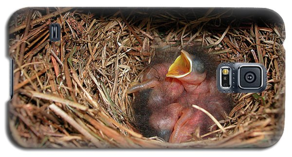 Galaxy S5 Case featuring the photograph Bluebird Babies by Marie Hicks