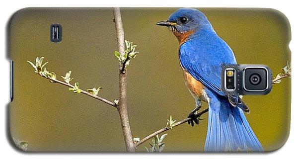 Bluebird Bliss Galaxy S5 Case