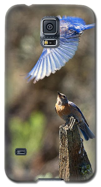 Bluebird Buzz Galaxy S5 Case by Mike Dawson