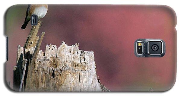 Bluebird Fall Perch Galaxy S5 Case