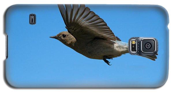 Bluebird Glide Galaxy S5 Case by Mike Dawson