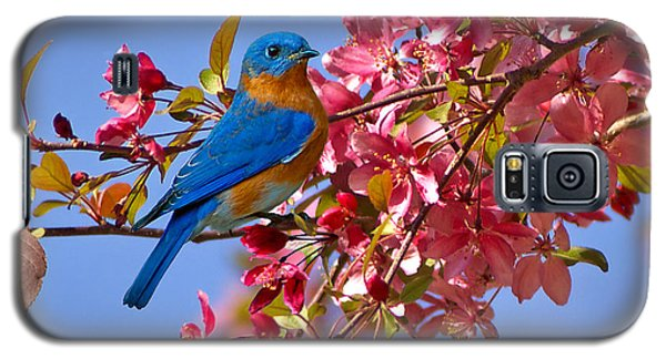 Bluebird In Apple Blossoms Galaxy S5 Case by Marie Hicks