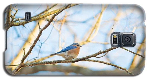 Bluebird In Tree Galaxy S5 Case