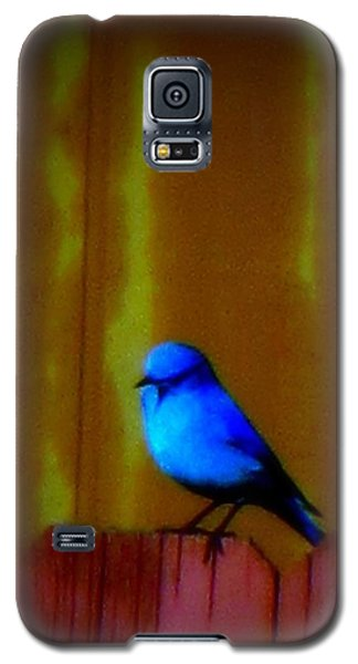 Galaxy S5 Case featuring the photograph Bluebird Of Happiness by Karen Shackles