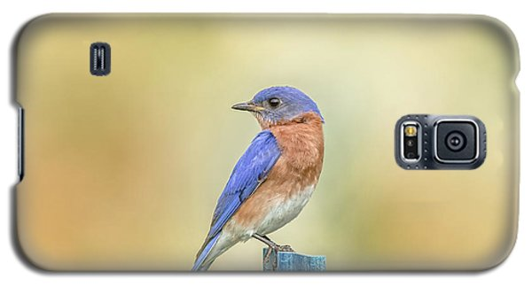 Galaxy S5 Case featuring the photograph Bluebird On Blue Stick by Robert Frederick