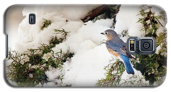 Galaxy S5 Case featuring the photograph Bluebird On Snow-laden Cedar by Robert Frederick