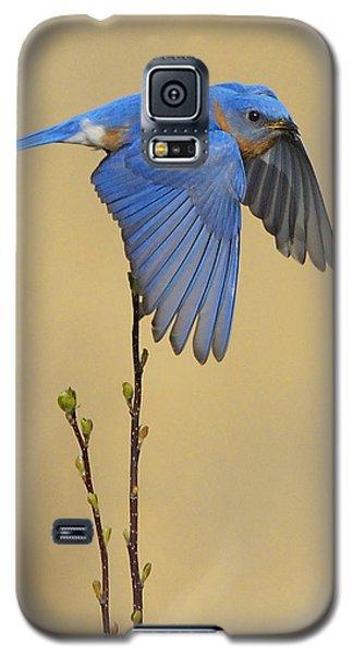 Bluebird Takes Flight Galaxy S5 Case
