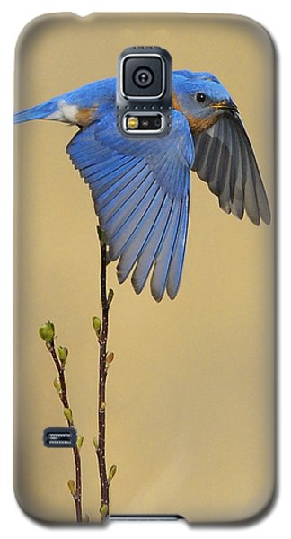 Bluebird Takes Flight Galaxy S5 Case