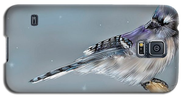 Winter Bluejay Galaxy S5 Case by Darren Cannell