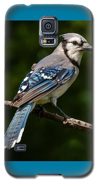 Galaxy S5 Case featuring the photograph Bluejay's Way by Jim Moore