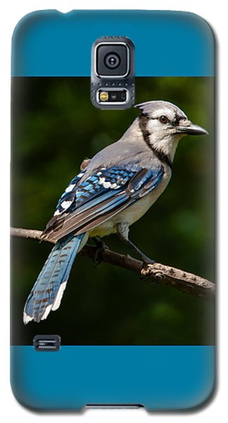 Bluejay's Way Galaxy S5 Case by Jim Moore