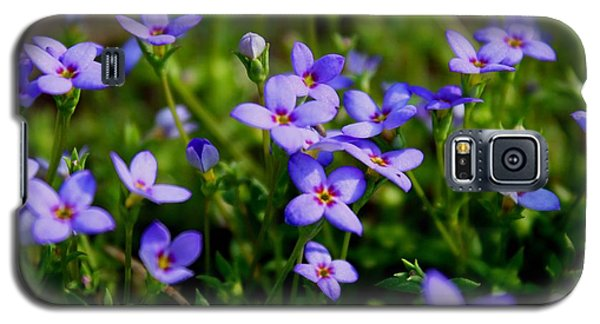 Galaxy S5 Case featuring the photograph Bluets by Kathryn Meyer