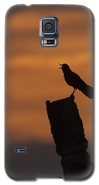 Boat-tailed Grackle At Sunset Galaxy S5 Case