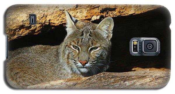 Bobcat Hiding In A Log Galaxy S5 Case