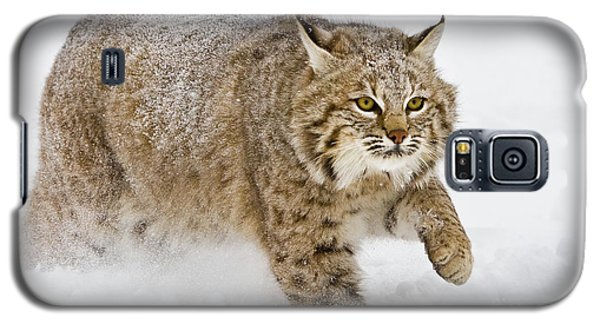 Bobcat In Snow Galaxy S5 Case by Jerry Fornarotto