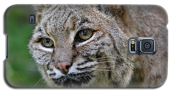 Bobcat In The Trees Galaxy S5 Case