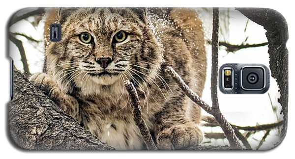 Bobcat In Winter Galaxy S5 Case