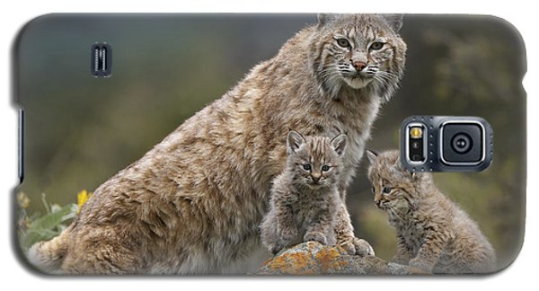 Bobcat Mother And Kittens North America Galaxy S5 Case