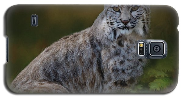 Bobcat On Alert Galaxy S5 Case