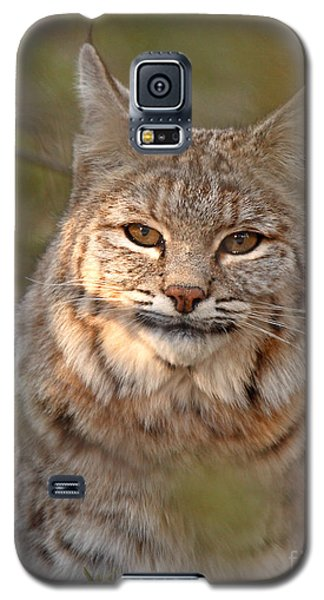 Bobcat Portrait Surrounded By Pine Galaxy S5 Case by Max Allen