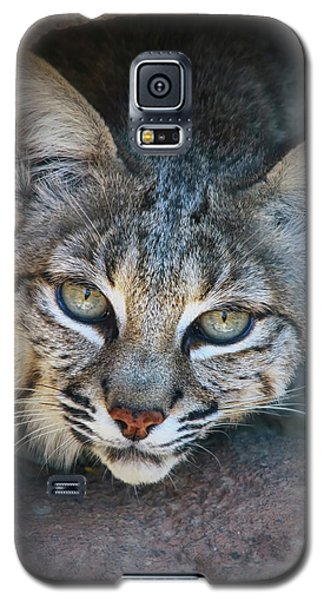 Bobcat Stare Galaxy S5 Case by Elaine Malott