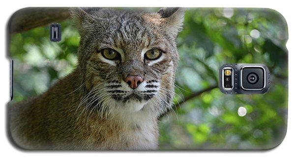 Bobcat Staring Contest Galaxy S5 Case