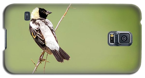 Galaxy S5 Case featuring the photograph Bobolink Looking At You by Ricky L Jones