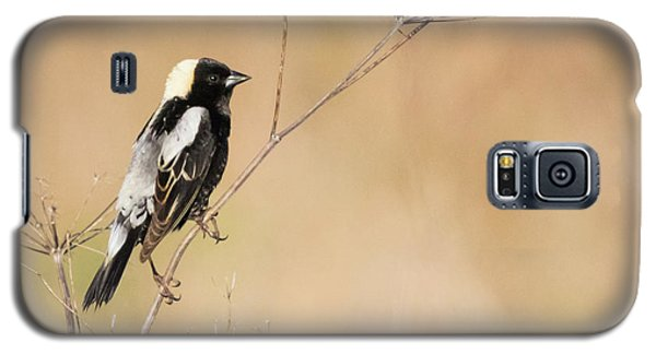 Galaxy S5 Case featuring the photograph Bobolink  by Ricky L Jones