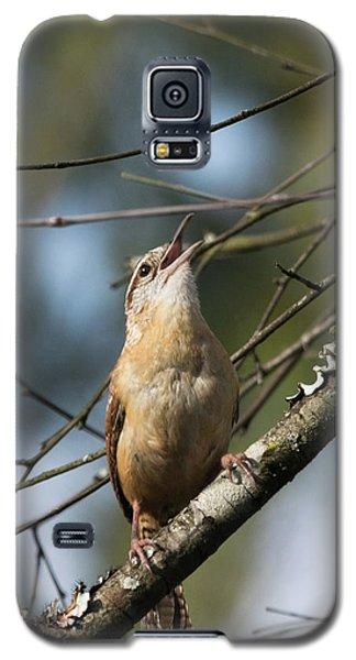 Bobolink Singing Galaxy S5 Case