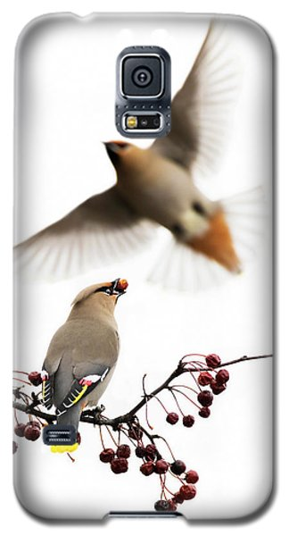 Galaxy S5 Case featuring the photograph Bohemian Waxwings by Mircea Costina Photography