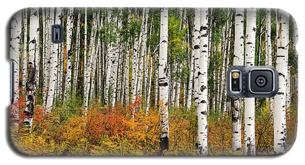 Galaxy S5 Case featuring the photograph Bold And Magnificent Autumn by Tim Reaves