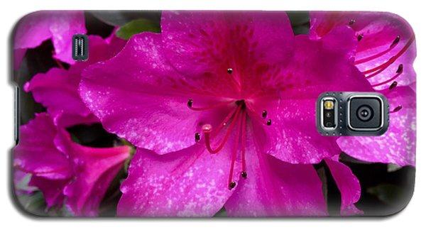 Bold Pink Flower Galaxy S5 Case