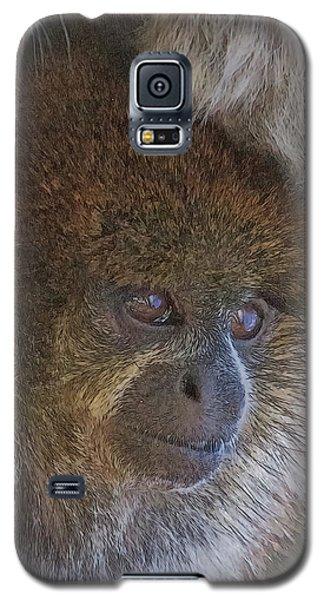 Bolivian Grey Titi Monkey Galaxy S5 Case