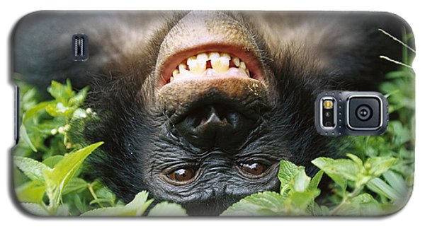 Bonobo Smiling Galaxy S5 Case