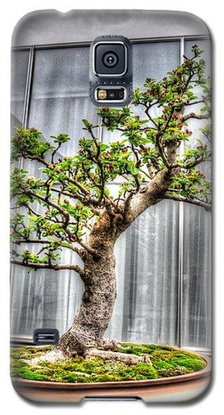 Bonsai Tree II Galaxy S5 Case by Wade Brooks