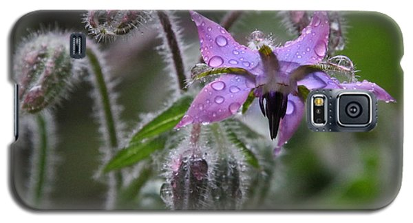 Borage Umbrella Galaxy S5 Case