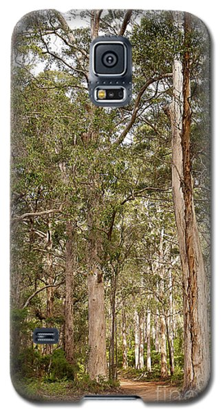 Galaxy S5 Case featuring the photograph Boranup Drive Karri Trees by Ivy Ho