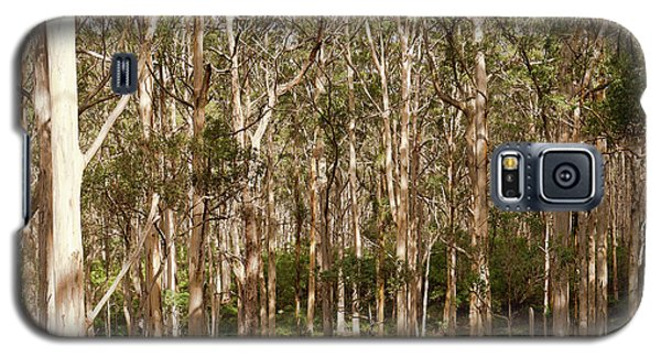 Galaxy S5 Case featuring the photograph Boranup Forest  by Ivy Ho