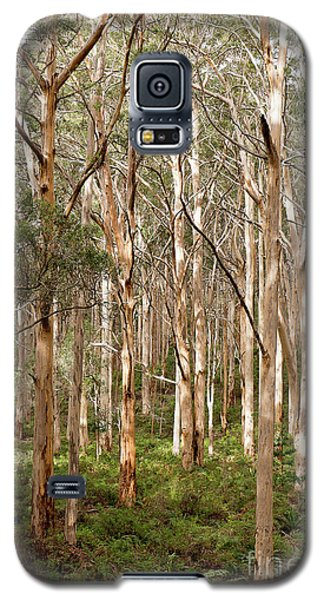 Galaxy S5 Case featuring the photograph Boranup Forest Portrait by Ivy Ho