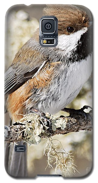 Boreal Chickadee Galaxy S5 Case