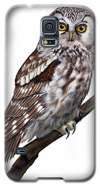 Boreal Owl Tengmalm's Owl Aegolius Funereus - Nyctale De Tengmalm - Paerluggla - Nationalpark Eifel Galaxy S5 Case