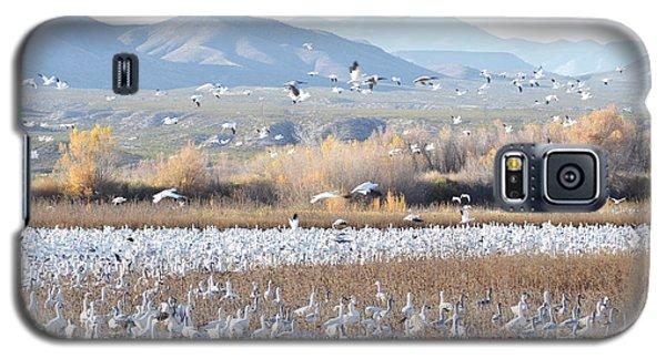 Bosque Del Apache Snow Geese Landscape Galaxy S5 Case by Andrea Hazel Ihlefeld
