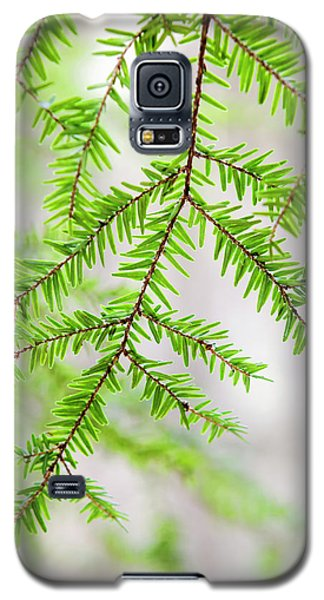 Galaxy S5 Case featuring the photograph Botanical Abstract by Christina Rollo
