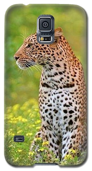 Botswana Leopard  Galaxy S5 Case by Happy Home Artistry