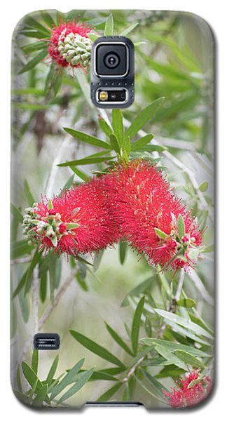 Bottlebrush Galaxy S5 Case
