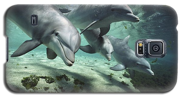 Four Bottlenose Dolphins Hawaii Galaxy S5 Case